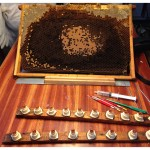 Bee - Making Queens 2014 (1)