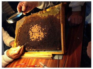 Bee - Making Queens 2014 (3)
