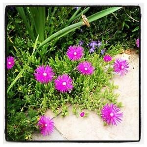 Flowers 3 - 2014