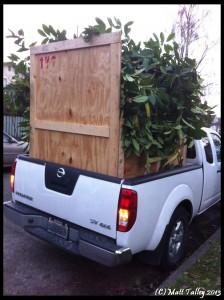 Truck Tie Downs 2012-3 (4)