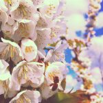 matt-talley_2017_spring-garden-1