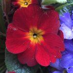 matt-talley_2017_spring-garden-2