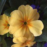 matt-talley_2017_spring-garden-4