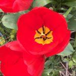 matt-talley_2017_spring-garden-5