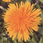 matt-talley_2017_spring-garden-7